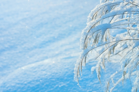 Winter background with a snow-covered grass photo