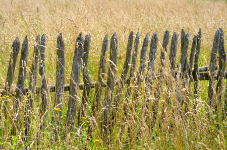Old wooden fence in the tall grass photo