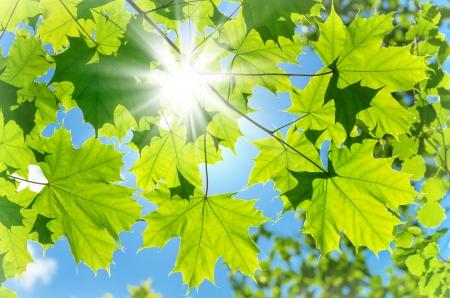 カラフルなカエデの葉の背景