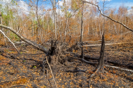 Consequences of forest fire  photo