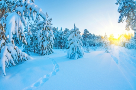 Sunset in snowy forest photo
