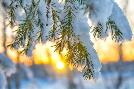 夕暮れ時の雪に覆われた木の枝
