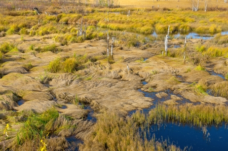 mire: Plot impassable swamp grass with fallen Stock Photo