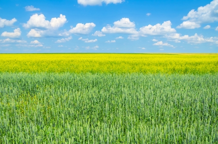 Rural Landscape Stock Photo - 25131909