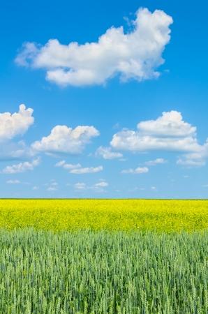 secale: Rural Landscape Stock Photo