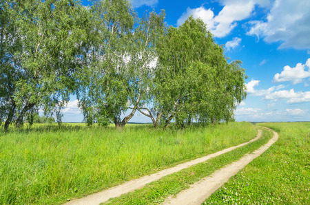 Summer landscape with dirt road photo