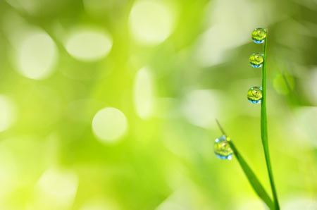 Bright spring background with a blade of grass with drops of dew photo