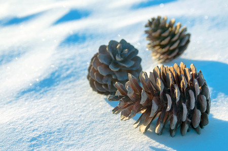 pine three: Three pine cones on snow