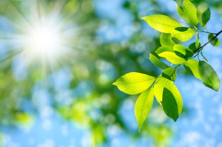 Heldere lente natuurlijke achtergrond