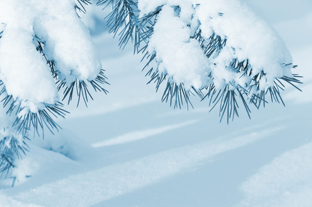 snowdrift: Winter background with snow-covered tree