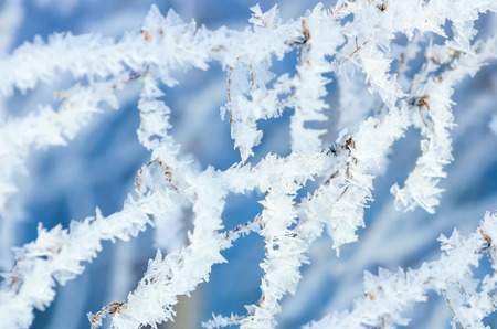 Tree branch in Crystal frost photo