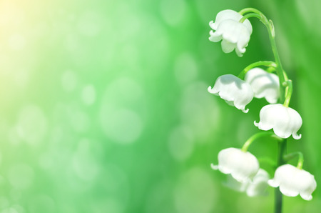 Spring background with blooming lilies close-up Banque d'images