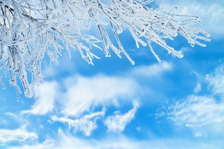 hoar frost: Branch in hoarfrost against the sky