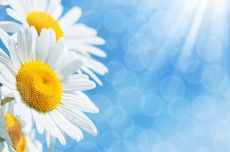 Summer background with colorful daisies against the sky Stok Fotoğraf