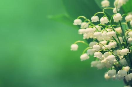 Natürlichen Hintergrund mit blühenden Lilien des Tales im Vintage-Stil Standard-Bild - 37624134