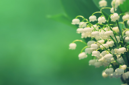 lily of the valley: Natural background with blooming lilies of the valley in vintage style