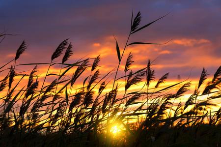 ドラマチックな夕焼け空の背景に対してリード