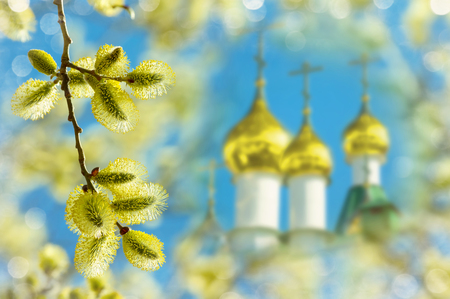 sallow: Easter background with blooming willow and golden domes