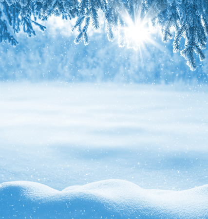 Winter background with snow-drifts and the christmas tree in frost Stock Photo