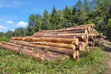 forest products: The cut logs in the wood. Industrial preparation of forest products. Stock Photo