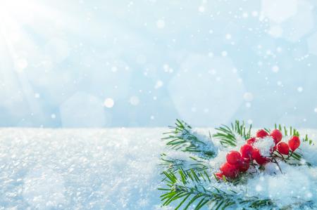 Winter achtergrond met takken van sparren en bos van lijsterbes Stockfoto