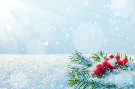 Winter background with branches of spruce and bunch of rowan Stock Photo