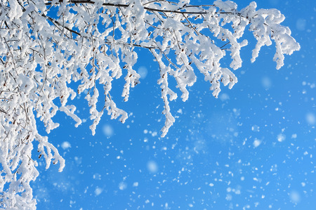 snow tree: Snow covered trees against a blue sky Stock Photo