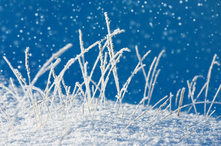 frost covered: Winter landscape with grass in the frost