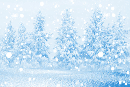 snowdrifts: Christmas background with snowdrifts and the coniferous snow-covered forest Stock Photo