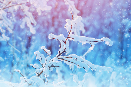 blue background texture: Winter landscape with snow-covered branches in the forest