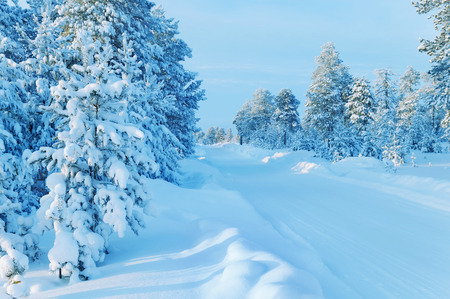 Winter landscape with road through snowy forest Stock Photo