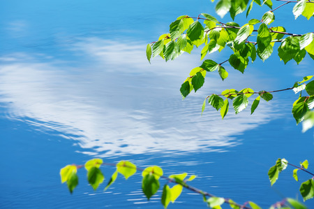 Birch branches with young foliage over water. Are reflected the blue sky with clouds in water. Stockfoto