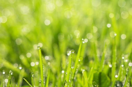朝露の滴と草の自然夏背景