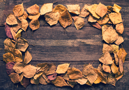 hojas antiguas: Frame from old leaves on wooden boards. Toning of vintage style.