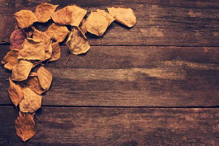 hojas antiguas: Capítulo de las hojas viejas sobre tablas de madera. Tonificación de estilo vintage.
