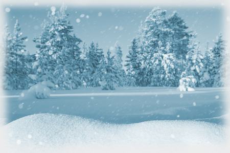 snowdrifts: Winter landscape with snowdrifts and snow-covered forest Stock Photo
