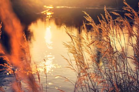 Herbstlandschaft. Reed durch den Fluss in der Strahlen Einstellung Sonne Standard-Bild - 65841320