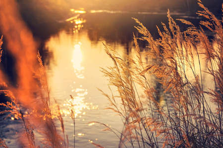 Herfst landschap. Reed door de rivier in de stralen ondergaande zon