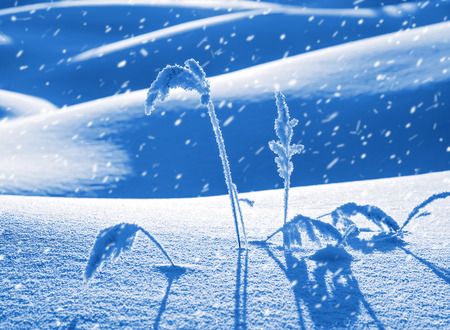 Winter scene with plant in frost with deep snowdrifts.