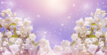 tree jasmine: Spring gentle background with bright blooming jasmine Stock Photo