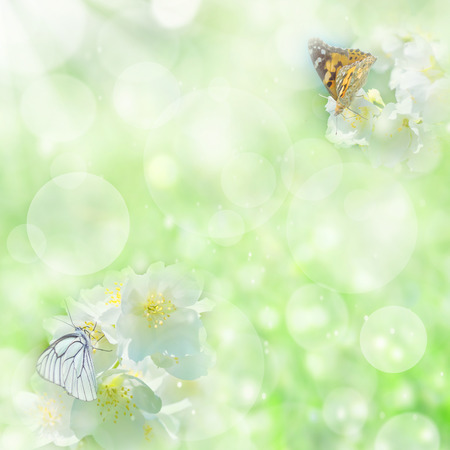 jasmin: Spring gentle background with  butterfly on  flower