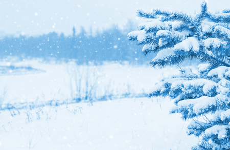 Bright winter landscape with snow-covered pine trees Stock Photo - 91090903