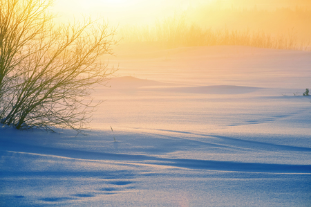 snowdrifts: Winter foggy landscape. Winter snowfield with snowdrifts in the rays of the rising sun