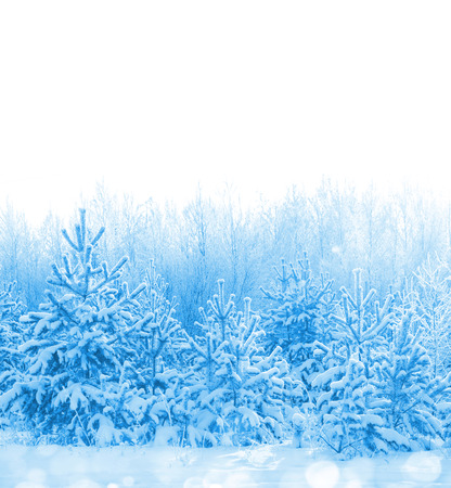 Forest covered with snow isolated on white background Stock Photo