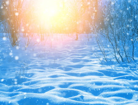 Winter scene. Colorful sunset with snowdrifts in a snowy forest.