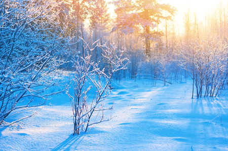 Winter landscape with colorful sunset in snowy forest