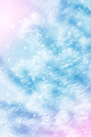Pine covered with hoarfrost branches in the fog. Winter background. Stock Photo