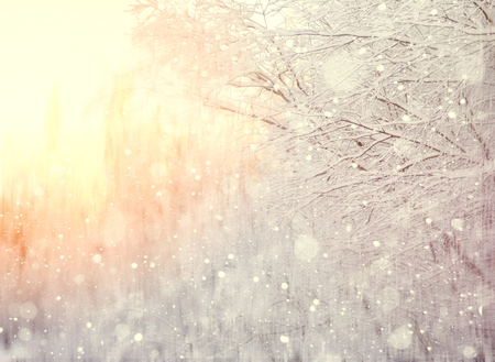 Winter blurred background with snow-covered tree branches Stock Photo