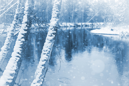 Landscape with the first snow. Snow-covered tree trunks on the banks of the river. Stock Photo