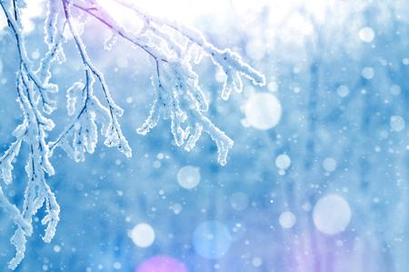Sfondo luminoso invernale. Rami di betulla congelati alla luce del sole.